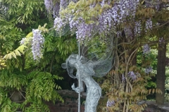 1cathriona with wisteria